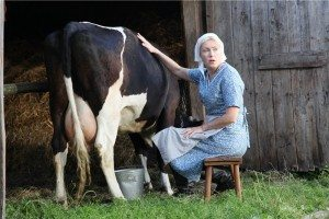 доить корову