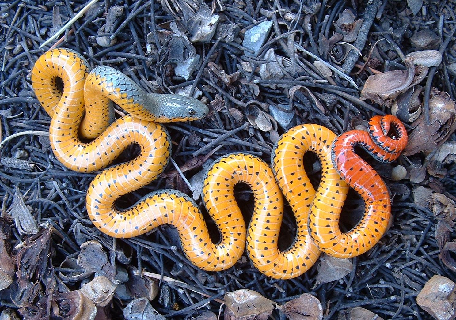 как змея извивается при сексе русское