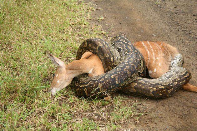 К чему снится змея которая хочет укусить