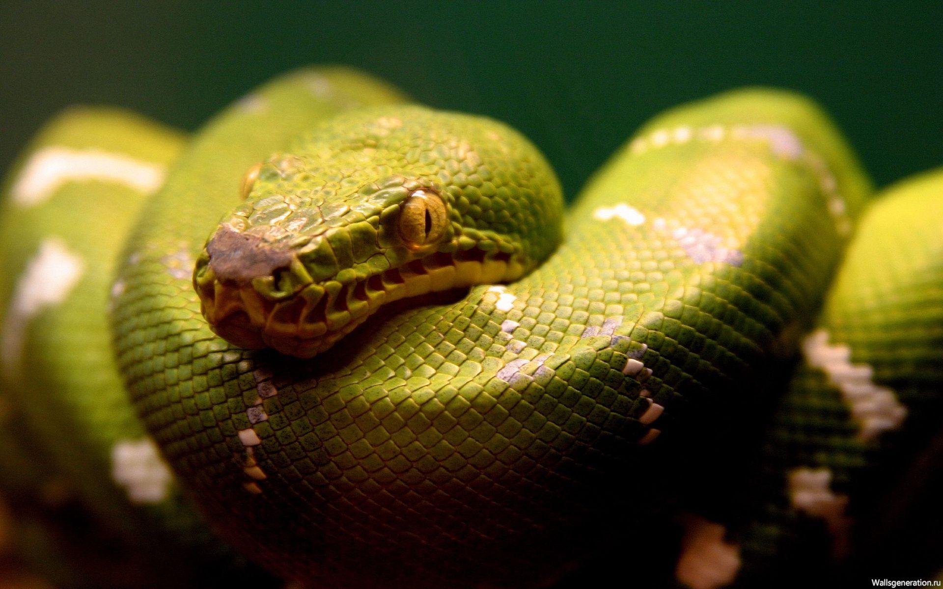 Секс со змеями история фото 38-679