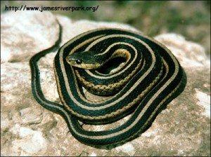 Видеть во сне много мертвых змей фото