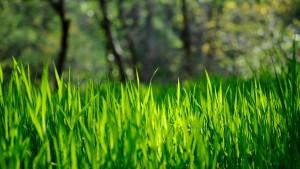 Толкование сна зеленая трава фото