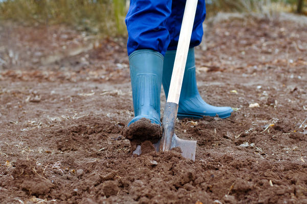 К чему снится копать лук
