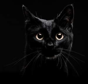 Сон видеть черного кота