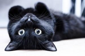 черный кот лежит