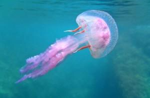 медуза скачать игру - фото 6