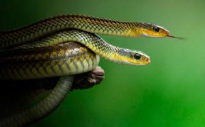 много маленьких змей
