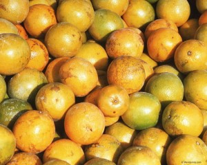 неспелые мандарины