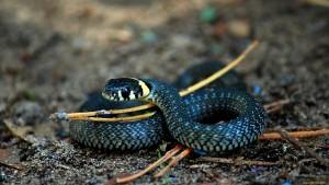 синие змеи