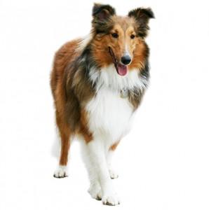 К чему снится нести собаку на спине