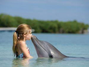Контактировать с дельфином