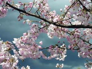Видеть во сне цветущие деревья белыми цветами