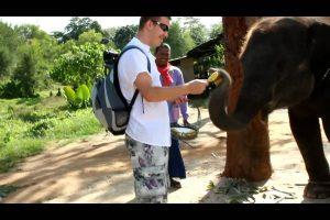 кормить слоненка