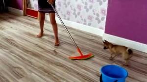 Жена моет полы видео онлайн фото 291-73