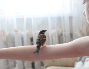 Птица попала в дом
