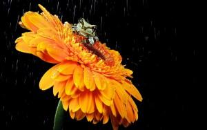 змея на цветке