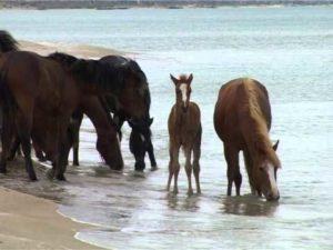 Вести лошадей на водопой