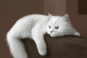 Увидеть белого кота во сне