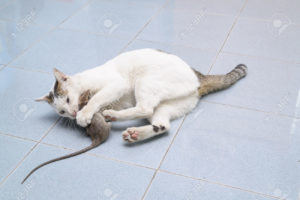 Белый кот поймал мышь