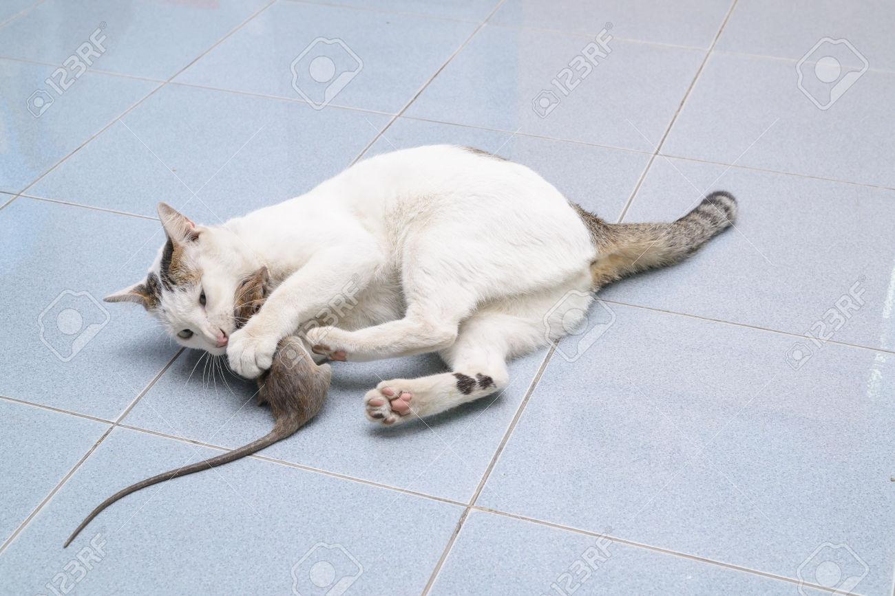 Приснилось кошки и крысы