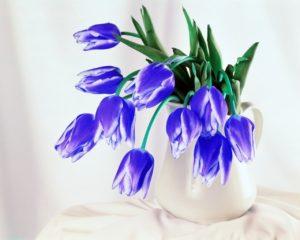 Голубые тюльпаны