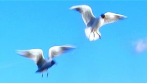 Пытаться поймать на лету
