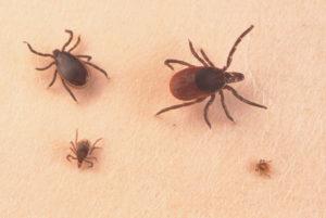 Много насекомых на теле