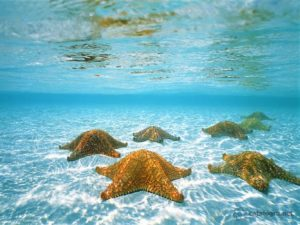 В кристально чистой воде