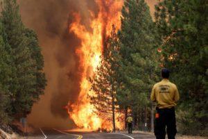 Лес или парк в огне