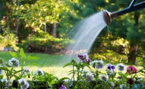 Орошать растения на клумбе
