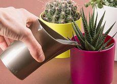 Увлажнять грунт кактусов