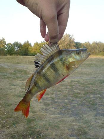 приснилась ловля рыбы на удочку