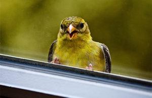 Маленькая птица стучит в окно