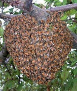 Найти семью насекомых на улице