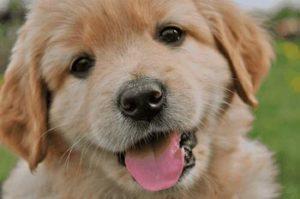 Если собачка маленькая сонник снится