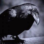 Ворона залетела в окно