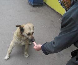 Кормить животное с рук