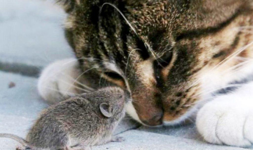 мышкой с чему к снится кот