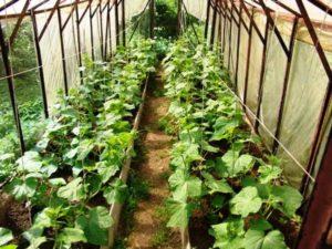 Растения на грядке