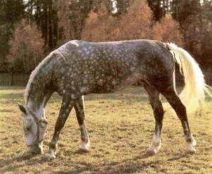 Цвет коня