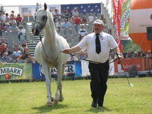 Покупать коня