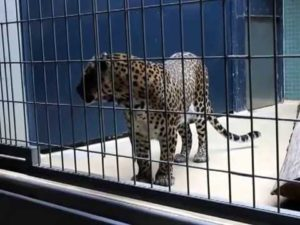 Животное в клетке