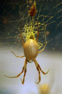 Золотое насекомое
