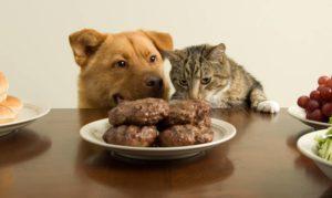 Блюдо для животных