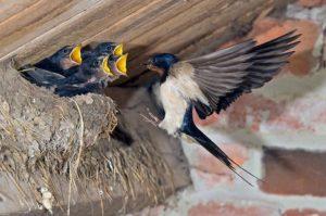 Птицы вьют гнездо