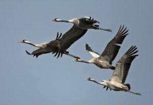 Стая птиц в небе