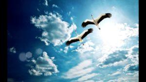 Парящие в небе