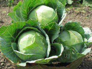 Зелень к снятся чему овощи