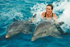 С дельфинами