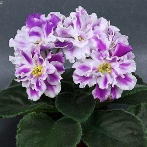 Живые цветы по соннику